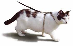cat leash