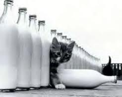 cats and milk
