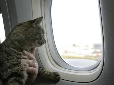pet airlines