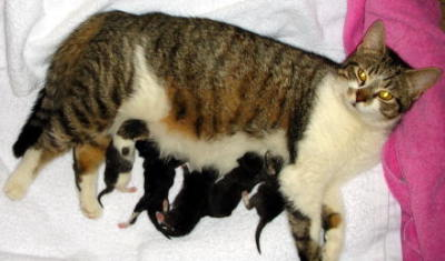 Cat Birthing Problems, Cat Birth Complications