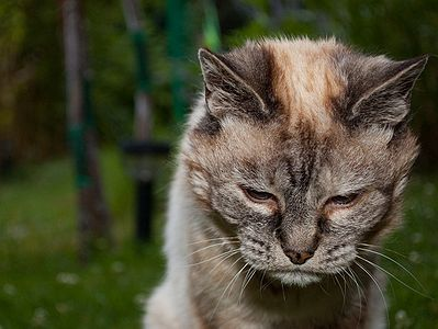 Health Problems of Older Cats
