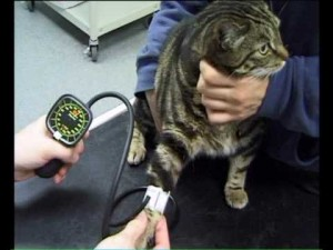 Preventative Health Care for Cats