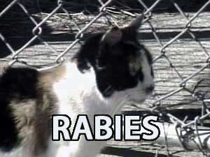 cats with rabies
