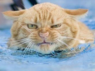 http://www.catsguru.com/wp-content/uploads/2011/03/Cat-First-Aid-How-To-Stop-A-Cat-From-Drowning.jpg