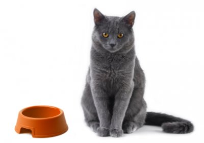 How Quickly Can Cats Lose Weight