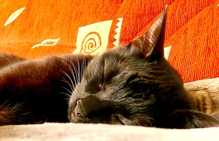 Sleep Behaviour In Cats