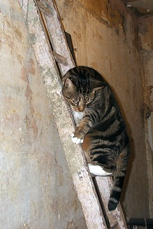 cats and builders