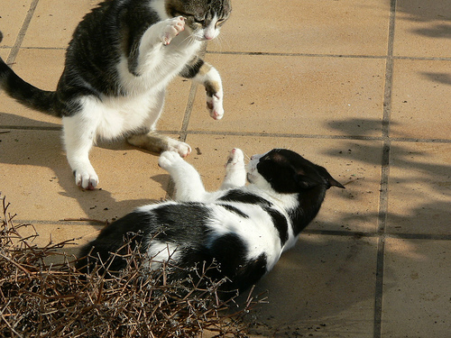 submissive cats